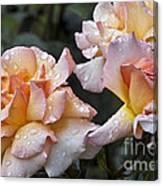 Rose Flower Series 7 Canvas Print