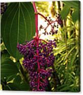 Rose Grape Canvas Print