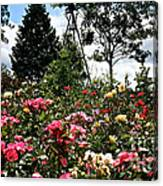 Rose Hill Canvas Print