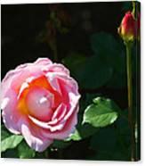 Rose In Chicago Botanic Garden Canvas Print