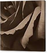 Rose In Sepia Canvas Print
