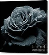 Rose In The Rain Canvas Print