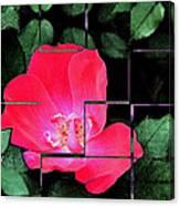 Rose Interrupted Canvas Print