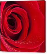 Rose Macro Wet 1 C Canvas Print