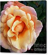 Rose Of Many Pastels Canvas Print
