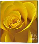 Rose Poetry Canvas Print