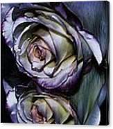 Rose Reflection 2 Canvas Print