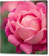 Rose (rosa 'star Of The Nile') Canvas Print