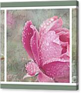 Rose Triptych 11 Canvas Print