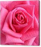 Rose With Droplets In Large-size Canvas Print