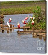 Roseate Spoonbills And Snowy Egrets Canvas Print