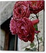 Roses In Napa Canvas Print