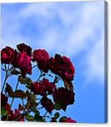 Roses In The Sky Canvas Print