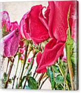 Roses In White Canvas Print