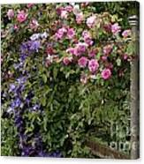 Roses On The Fence Canvas Print