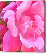 Roses Perfectly Pink Canvas Print