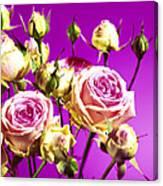 Roses (rosa Sp.) Canvas Print