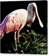 Rosette Spoonbill Shimmering Canvas Print