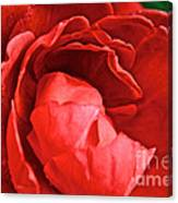 Rosie Red Canvas Print