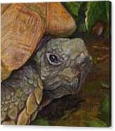 Rosie The Turtle Canvas Print