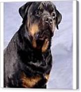 Rottweiler 2025 Canvas Print