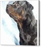 Rottweiler 923 Canvas Print