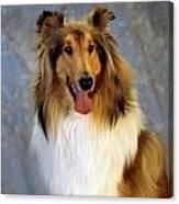 Rough Collie Dog Canvas Print