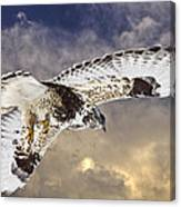 Rough Legged Hawk In Flight Canvas Print