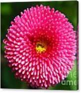 Round Pink Flower Canvas Print