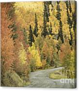 Routt National Forest Canvas Print