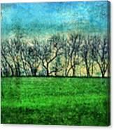 Row Of Trees Canvas Print