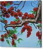 Royal Poinciana Canvas Print