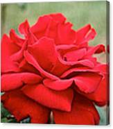 Royal Red Rose Canvas Print