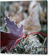 Ruby Frost Canvas Print