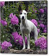 Ruby In The Garden Canvas Print
