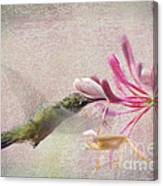 Ruby Throated Hummingbird #3 Canvas Print