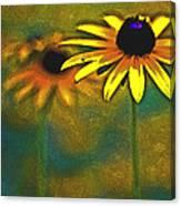 Rudbeckia Hirta Canvas Print
