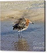 Ruffled Reddish Egret  Canvas Print