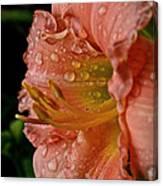 Ruffles And Rain Canvas Print