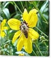 Rumble With A Bee Canvas Print