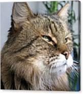 Runcius- My King Kitty Enjoying The Sunshine Canvas Print