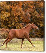 Running Into Autumn Canvas Print
