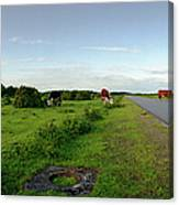 Runway Light With Cows Canvas Print