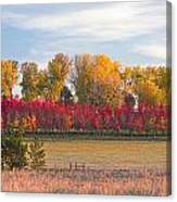 Rural Country Autumn Scenic View Canvas Print