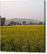Rural Landscape With A Field Of Mustard Canvas Print