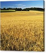 Rural Summer Scene Canvas Print