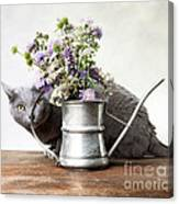 Russian Blue 03 Canvas Print