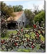 Rustic Cactus Abandoned Barn Canvas Print