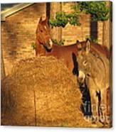 Rusty And Brown Sugar Canvas Print