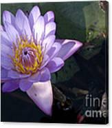 Sacred Lotus Canvas Print